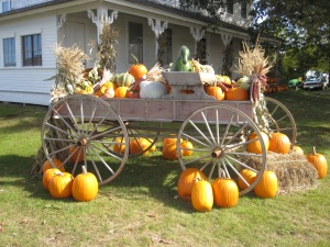 Pumpkins greeted us at Moulton Farms in Meredith, New Hampshire.